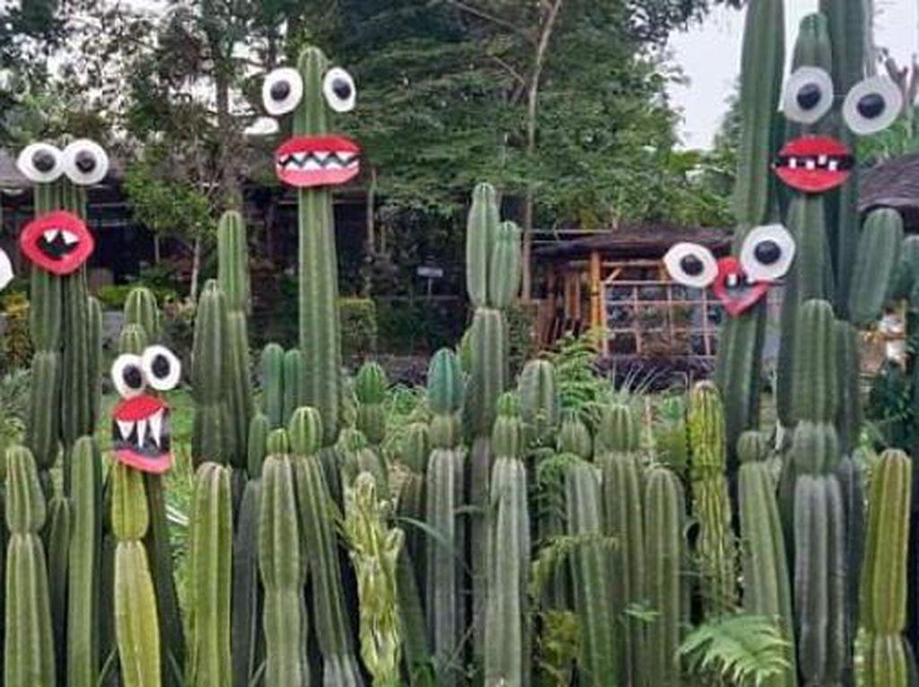 Lucunya Tanaman Kaktus di Taman Anggrek Kediri
