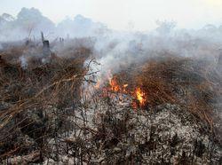 BRG, Badan Bentukan Jokowi yang Kini Terancam Dibubarkan