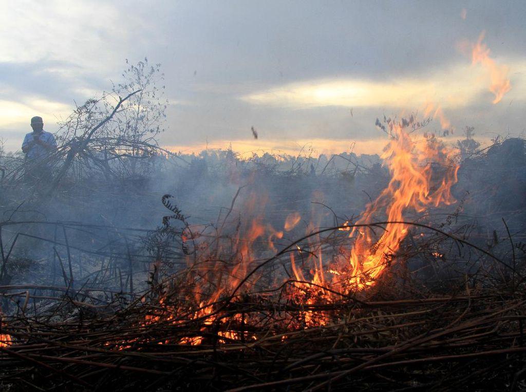 Lahan Gambut di Parepare Terbakar, 8 Mobil Pemadam Diterjunkan