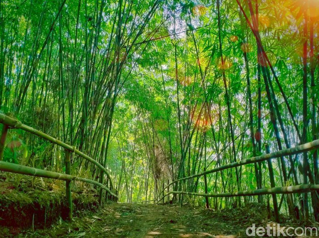 Hutan Bambu Mirip Kyoto di Bandung