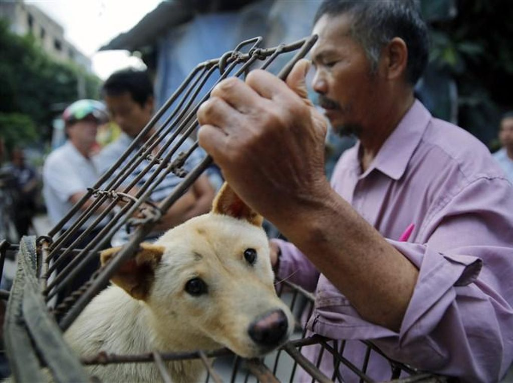 5 Fakta Festival Daging Anjing Yulin di China yang Dikecam