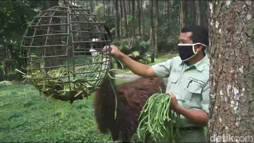 Foto: Taman Safari Prigen Bersiap Sambut Wisatawan Era New Normal