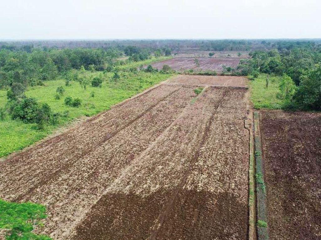 Lumbung Pangan Pertama RI Disiapkan, Prabowo Ikut Turun Tangan