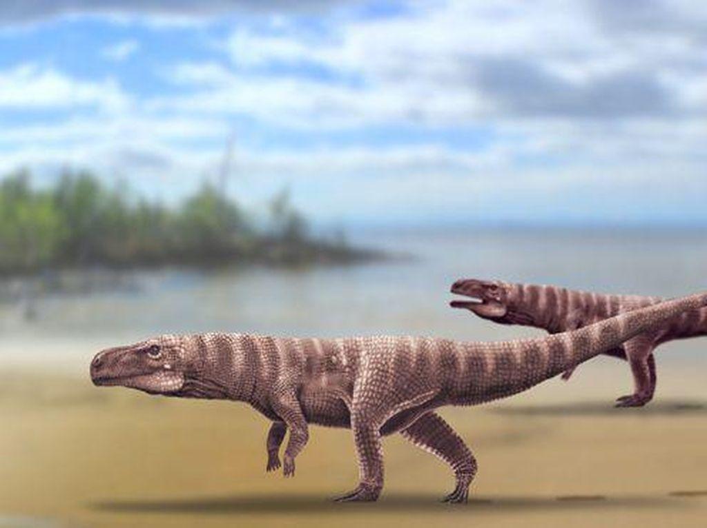 Ilmuwan Temukan Buaya Kuno yang Berjalan dengan Dua Kaki