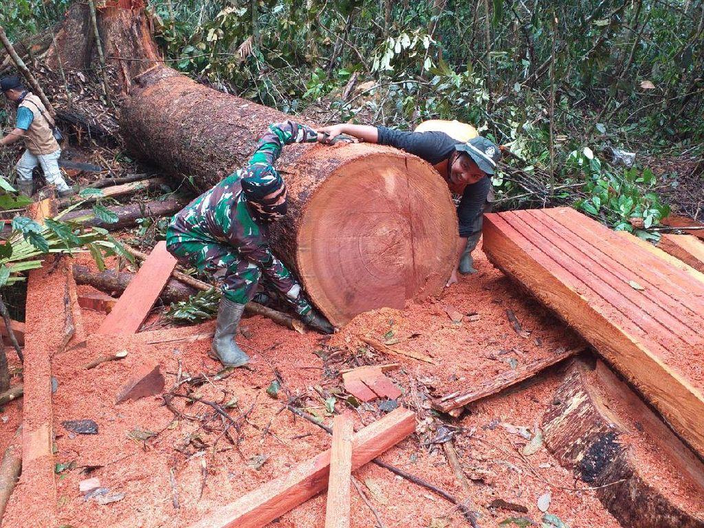 TNI dan Polhut Temukan Illegal Logging di Taman Nasional Tesso Nilo Riau
