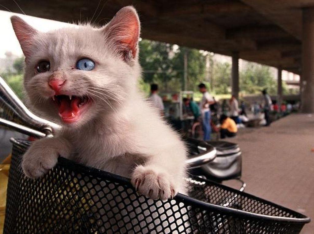 Miris! Ratusan Kucing Ini Dicuri di China Untuk Dijadikan Santapan