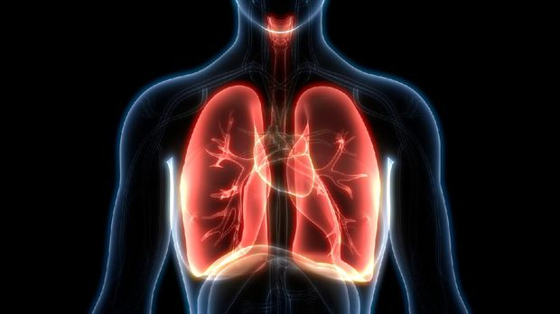 ilustrasi paru-paru