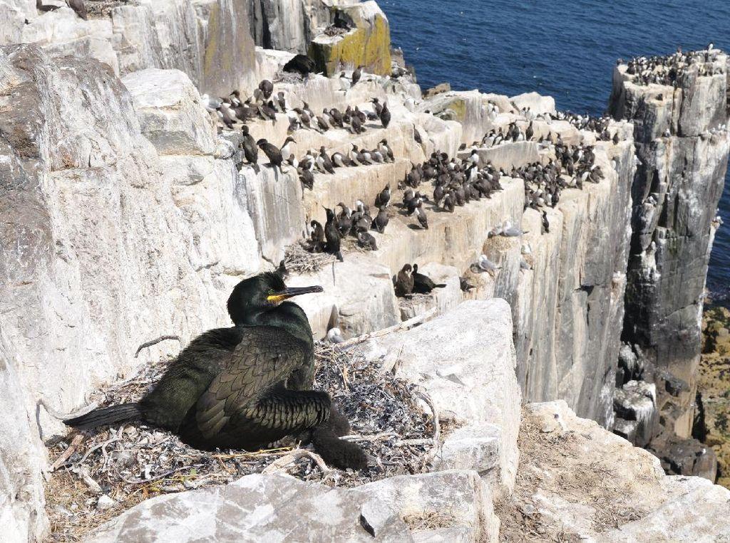 Miris! 80% Sarang Burung di Pulau Terpencil Tercemar Sampah Plastik