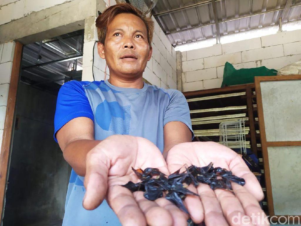 Kisah Pebisnis Empedu Kobra yang Bertaruh Nyawa Berbekal Keris Pusaka
