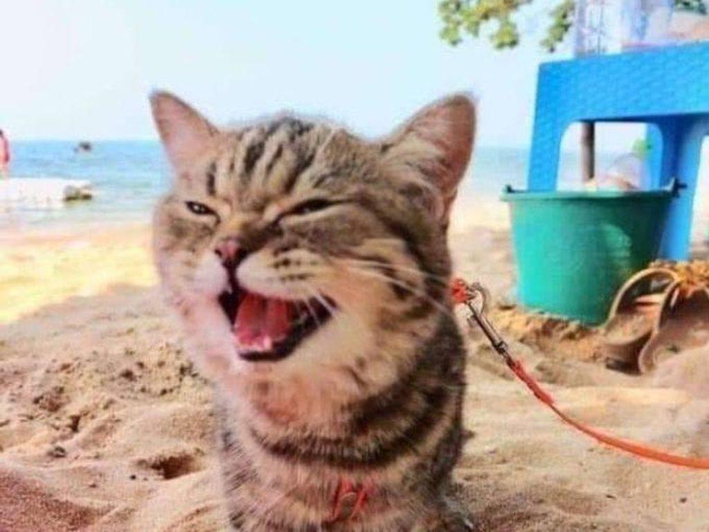 Gemasnya Ekspresi Anak Kucing Saat Perdana ke Pantai