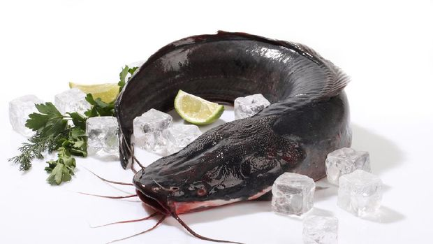 Catfish on ice with lemon on white background.