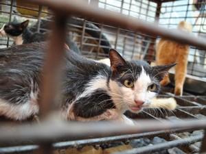 Meski Dikecam, 5 Negara Ini Masih Konsumsi Daging Kucing