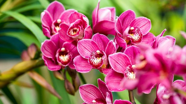 Close up of pink orchids.