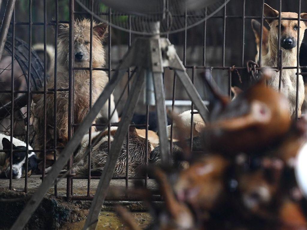 Pasangan Ini Tertangkap Racuni Anjing dan Kucing Untuk Dijual Dagingnya