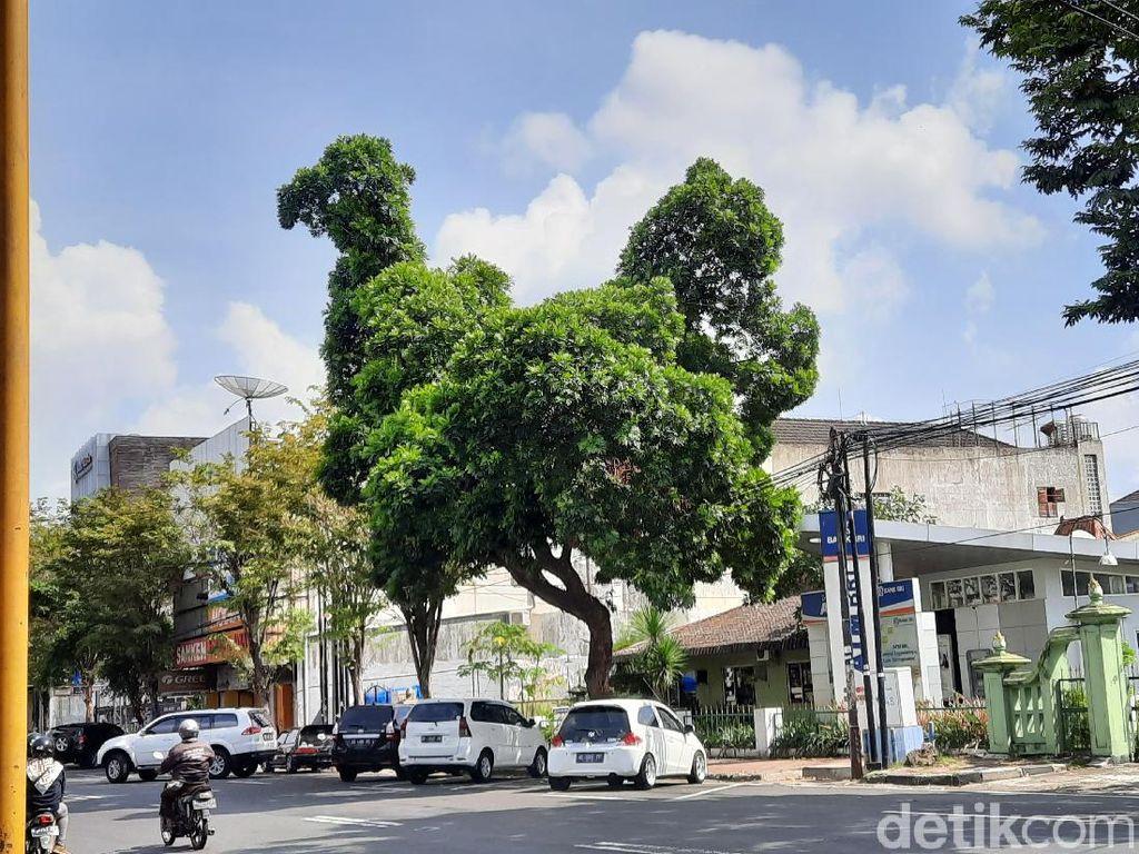 Ketua RW Ungkap Sejarah Lokasi Pohon yang Viral Mirip Ayam Raksasa di Yogya