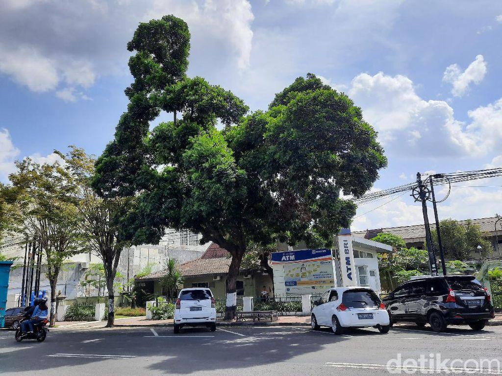 Warga Sebut Pohon yang Viral Gegara Mirip Ayam di Yogya Terbentuk Alami