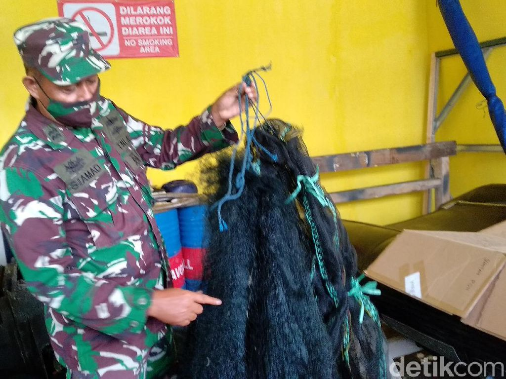 Tangkap Bayi Lobster Tanpa Izin, 3 Nelayan Pangandaran Ditertibkan