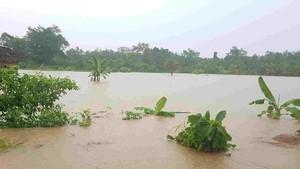 362 Hektare Sawah Rusak Akibat Banjir di Morowali Utara