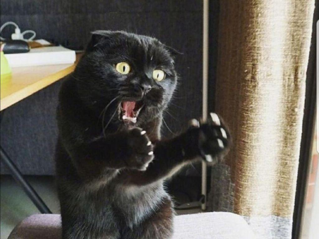 Beragam Ekspresi Lucu Si Kucing Bikin Weekend Ceria