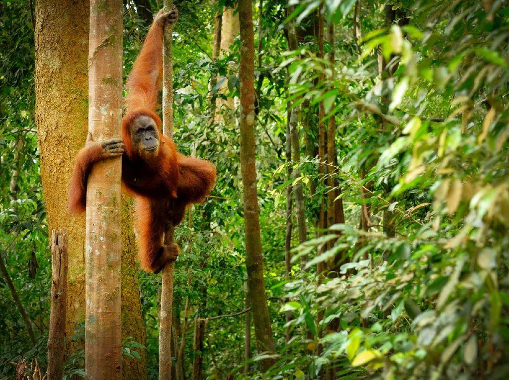 Menjajal Wisata Alam Bukit Lawang, Bukan Sekadar Kawasan Konservasi