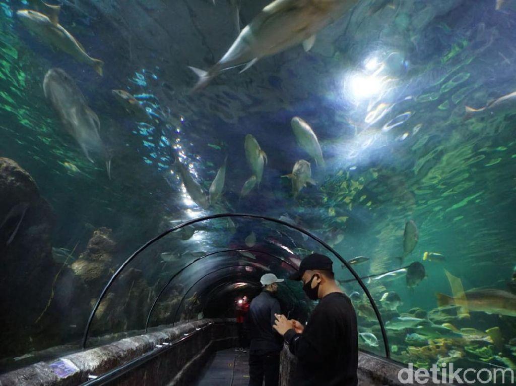 Sea World Ancol Bersiap Menyambut Pengunjung