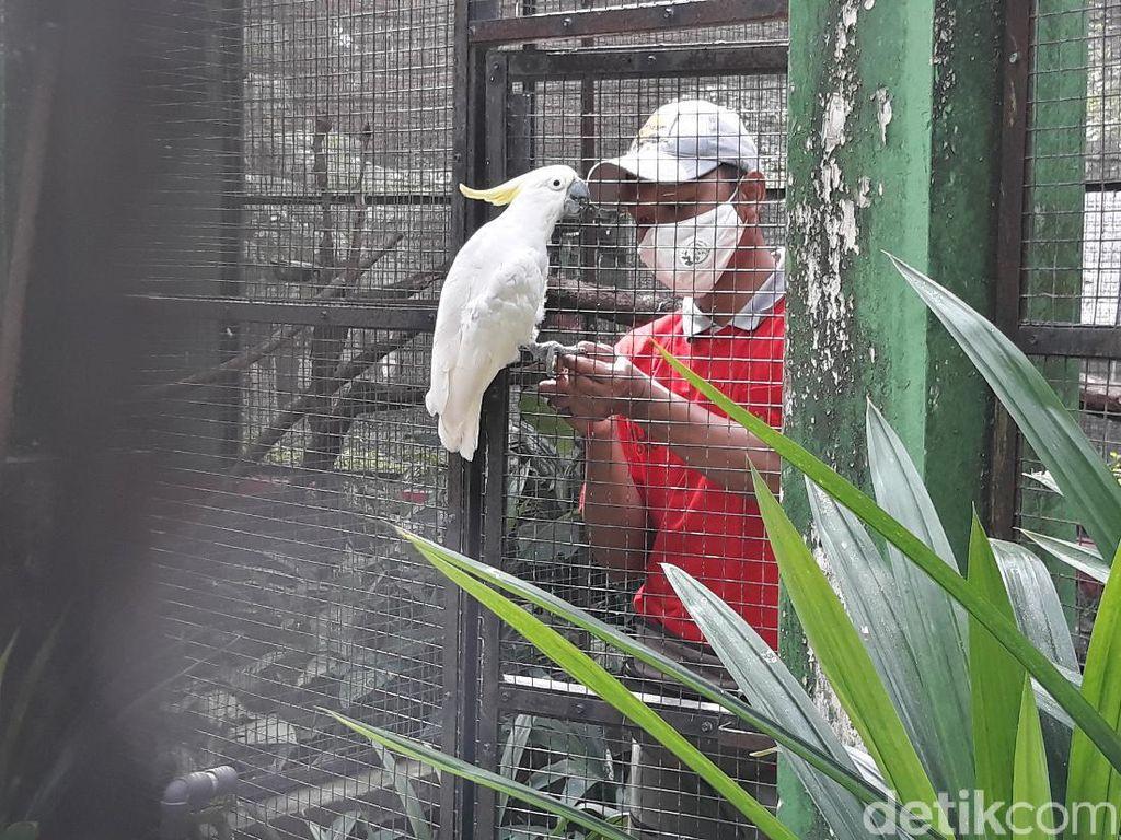 Solo Zoo Resmi Dibuka, Batasi 1.000 Pengunjung Per Hari