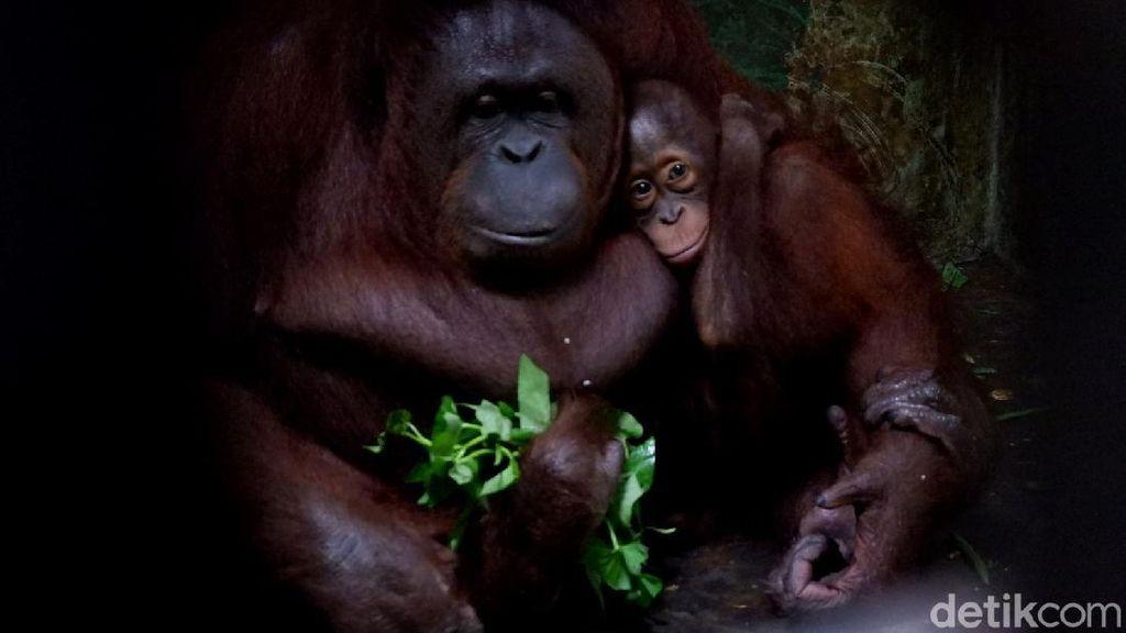 Kebun Binatang Banjarnegara Siapkan Jalur Khusus Wisatawan