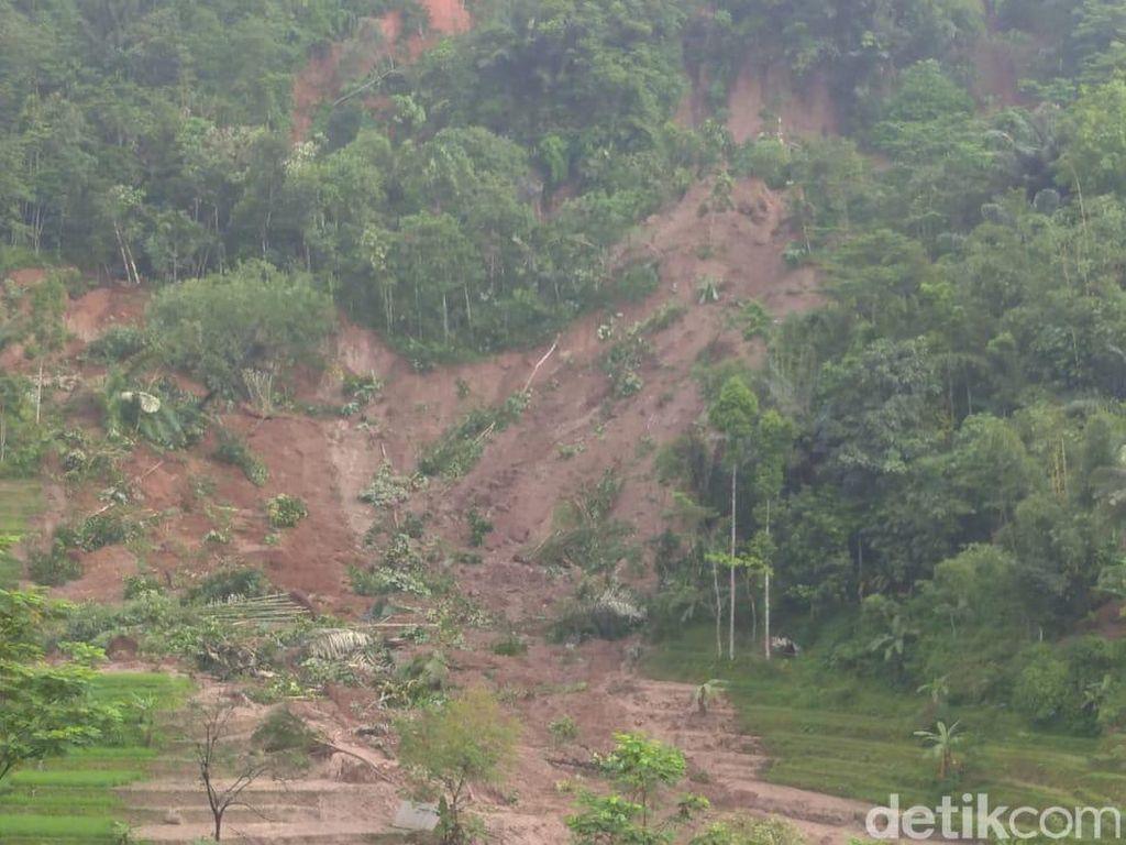 Bukit Longsor Timbun Sawah Picu Kepanikan Warga Cikubang Tasikmalaya