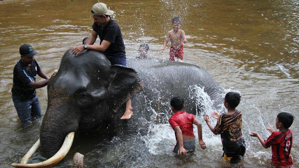 Serunya Main Air Sambil Memandikan Gajah di Aceh
