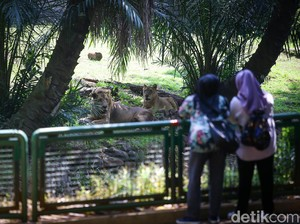 Tak Ada Kenaikan Pengunjung di Ragunan-Ancol Saat Long Weekend Idul Adha