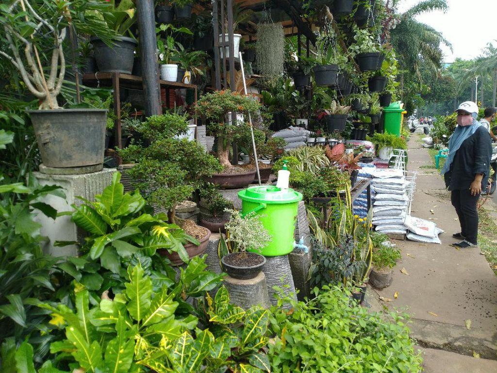 Pandemi COVID-19, Pedagang Tanaman di Sekitar Ragunan Tetap Ramai Pembeli