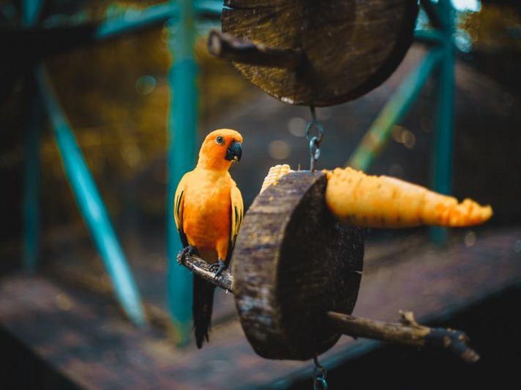 Serunya Berkunjung ke Gembira Loka Zoo Jogja