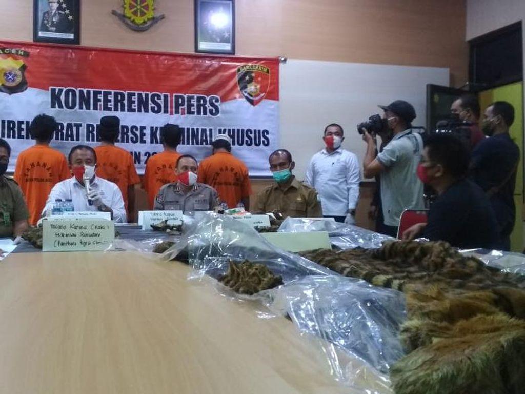 Jual Kulit Harimau Rp 100 Juta, 4 Pria Aceh Ditangkap Polisi