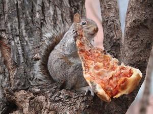 Tupai Liar Ini Panjat Tiang Listrik Sambil Gondol Pizza
