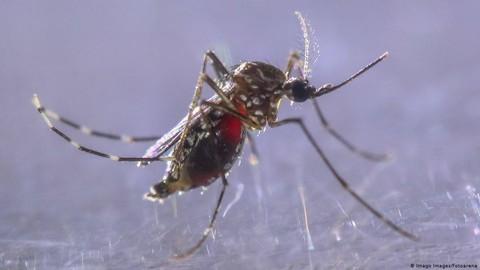 Waspada ancaman dbd di tengah pandemi covid 19 169