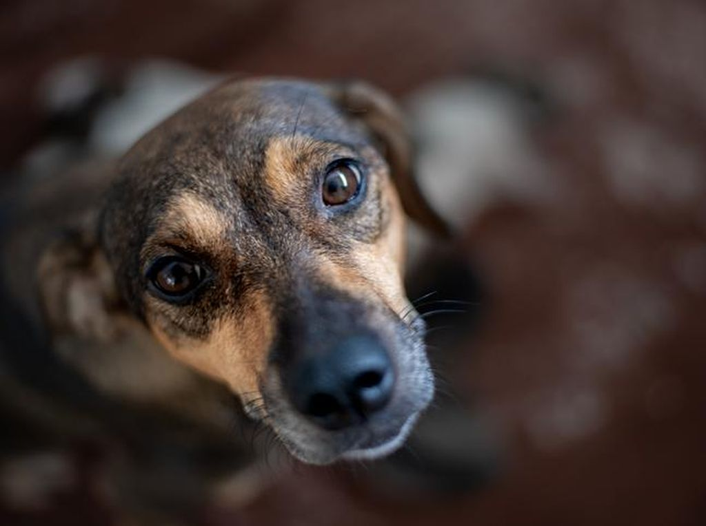 Viral Anjing Disetubuhi Pria Bikin Emosi Sahabat Satwa