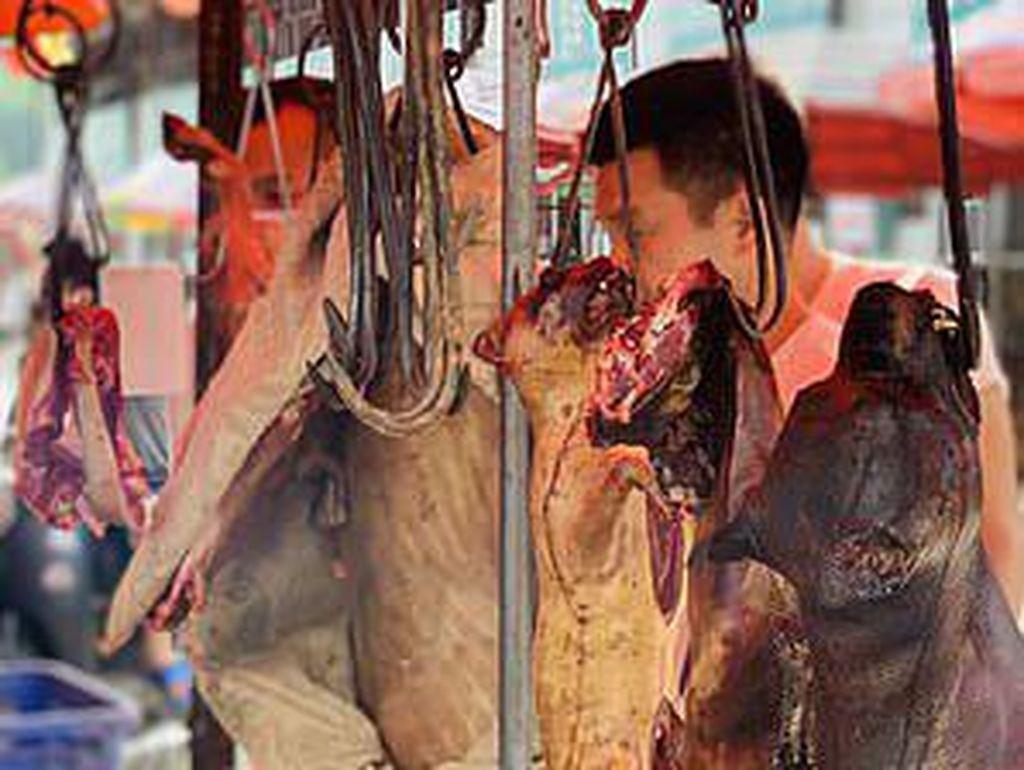 Ngeri! Pemandangan Anjing yang Dibantai Untuk Jadi Santapan Warga China