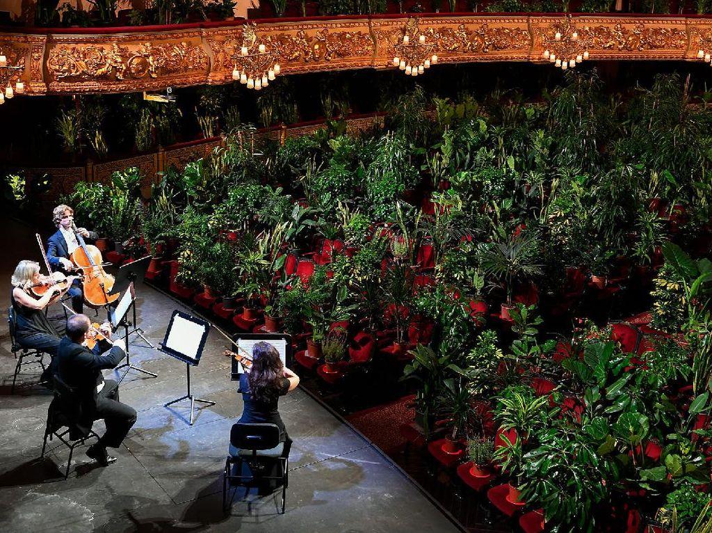 Tak Mendatangkan Penonton, Pertunjukan Musik Ini Dihadiri 2.292 Pot Tanaman
