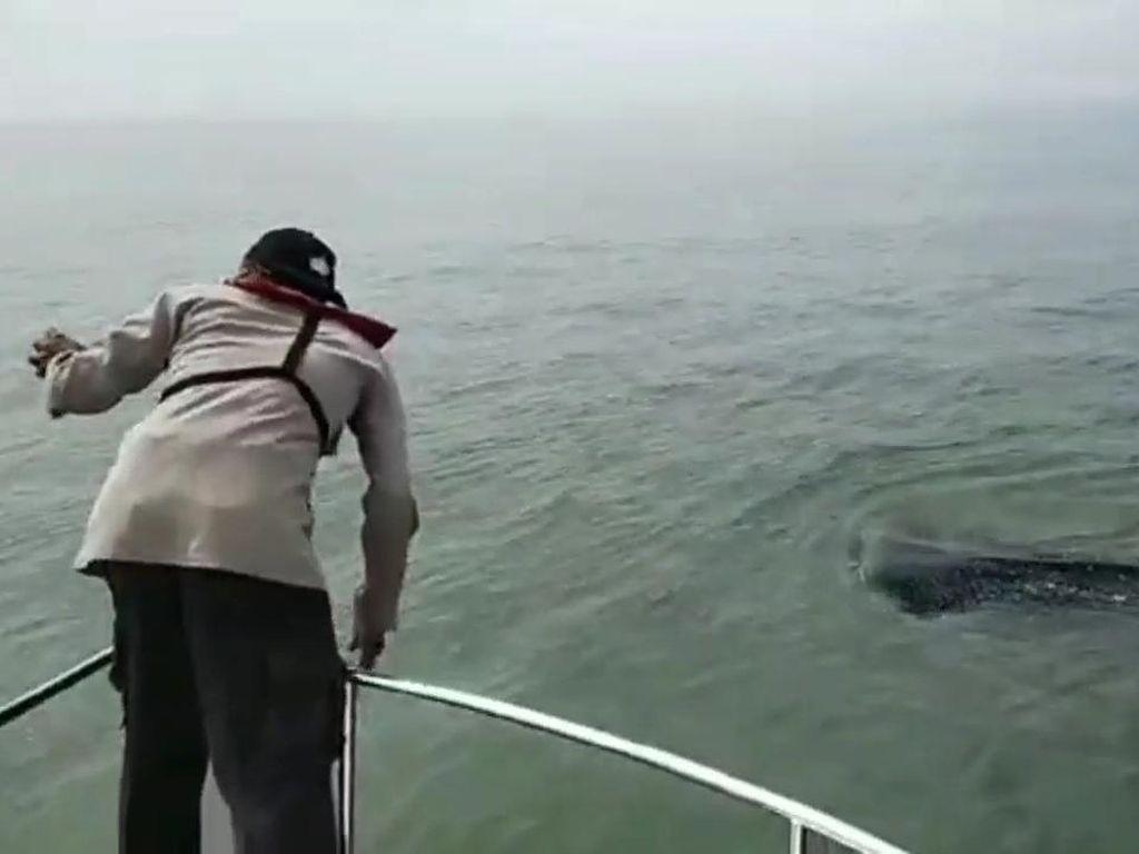 Viral Video Wisatawan Ganggu Hiu Paus, Polisi Patroli Laut