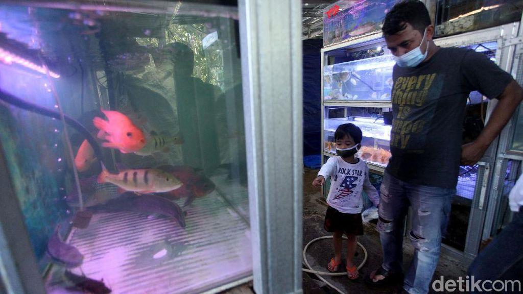 Laris Manis Penjualan Ikan Hias di Masa Pandemi