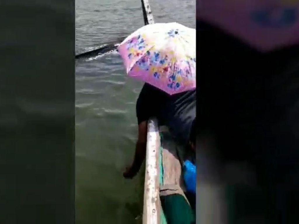 Viral Hiu Paus Ditabrak Perahu Wisata di Perairan Pasuruan