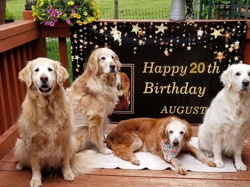 Gemas! Anjing Usia 20 Tahun Ini Rayakan Ultah dengan Kue Tart