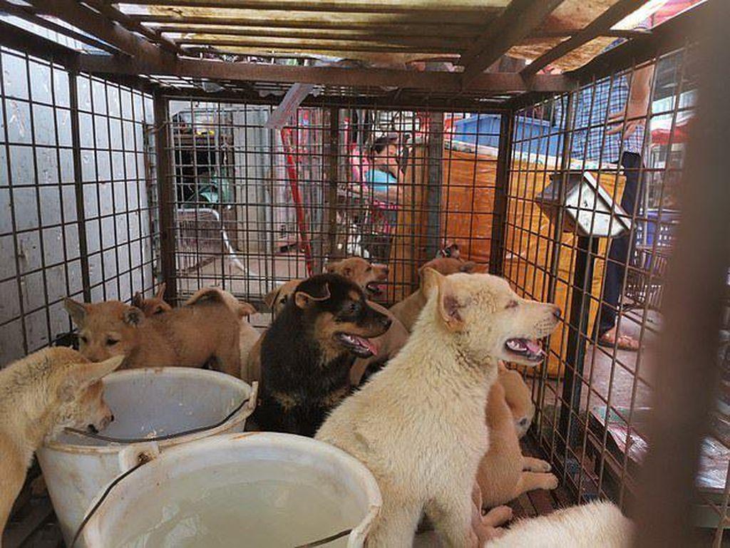 Nyaris Dimasak, Puluhan Anjing Ini Diselamatkan dari Pasar Daging di China