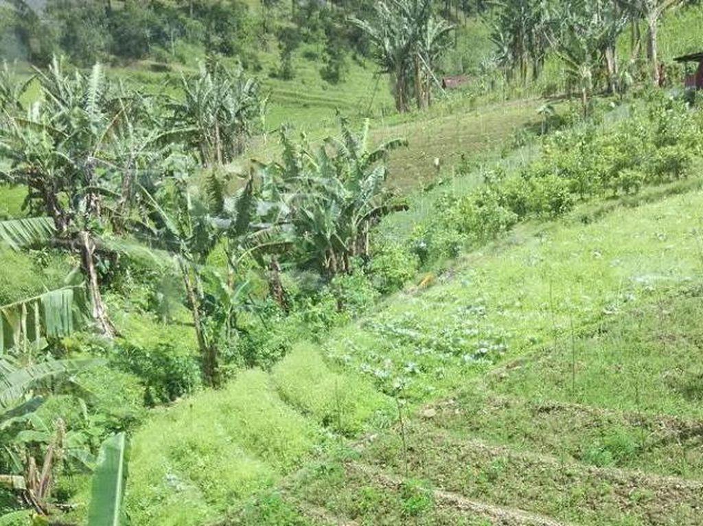 Bentang Alam Pulau Jawa yang Harus Diketahui Sebelum Merencanakan Liburan