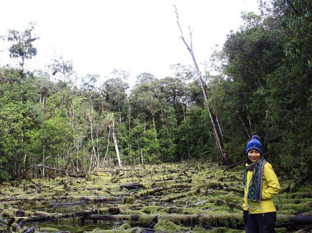 Pengalaman Ekstrem Mendaki Gunung Tertinggi di Sulawesi Tenggara