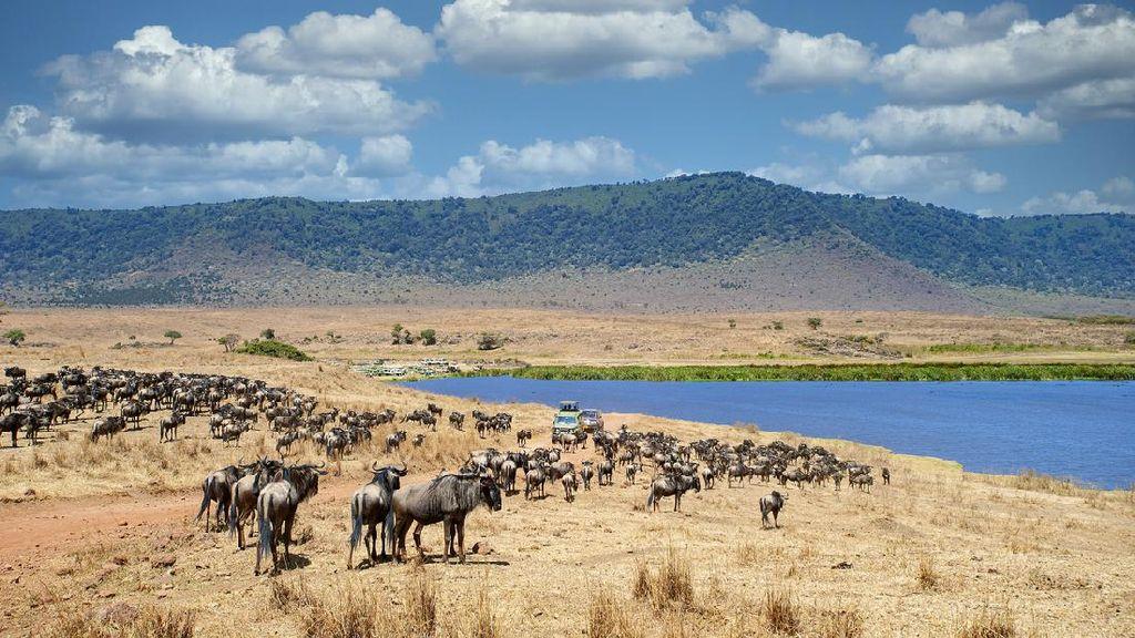 7 Tempat Wisata Tanzania yang Tak Kalah Indah dari Tanzanite