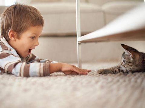 A little boy lying on his bedroom floor and playing with a kittenhttps://195.154.178.81/DATA/i_collage/pi/shoots/783344.jpg