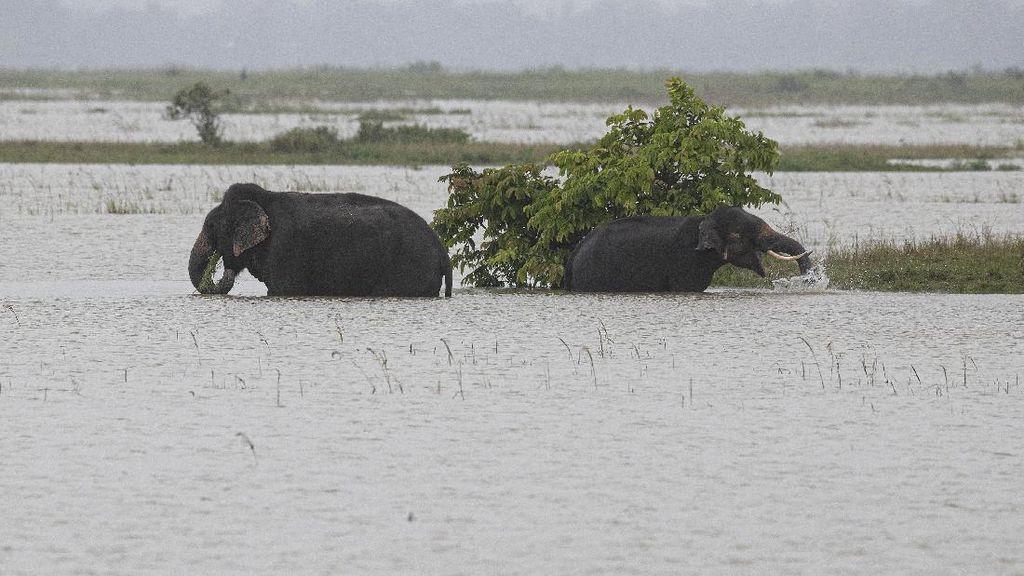 Kasihan Gajah dan Badak Ini Jadi Korban Banjir