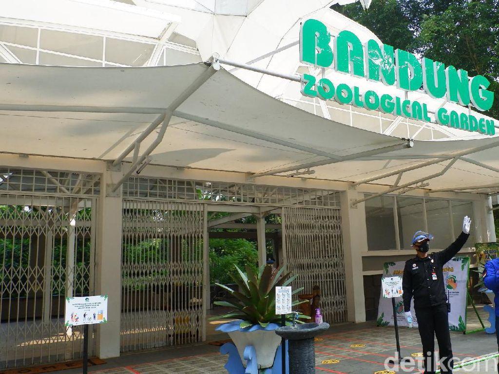 Ini Upaya Bandung Zoo Selamatkan Satwa di Tengah Minimnya Pemasukan