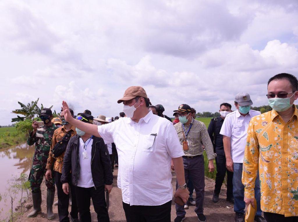 Pemerintah Akan Bangun Food Estate Tahap Pertama di Pulau Pisang-Kapuas